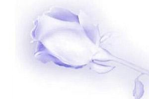 Silver Rose Entertainment Studios Logo
